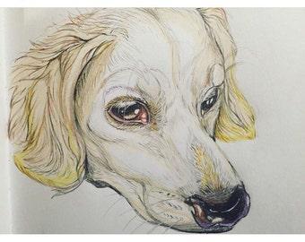 Full color pet portrait