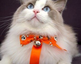 Cat Bow Tie with Collar & Bell - Orange Bow-tie With Skull Print for Cats and Kitten with Collar.