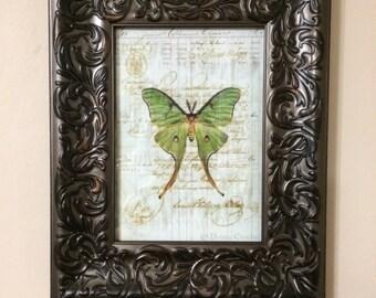 Moth Print in Frame