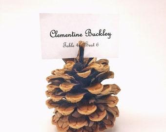 Wedding Place Card Holders - Pine Cone Settings - (50) Colorado Pine Cones