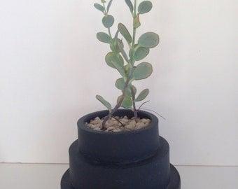 stepped vase