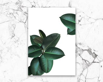 Poster, print, rubber tree, photography
