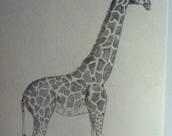 Standing Tall- giraffe, home decor, nature