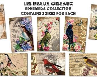 Les Beaux Oiseaux