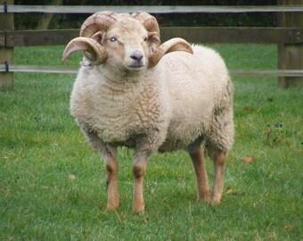 Portland Raw Fleece