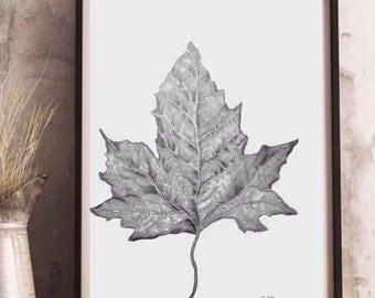 Pencil sketch, Graphite drawing, Original sketch, nature drawing, Graphite sketch, Leaf art, black and white art