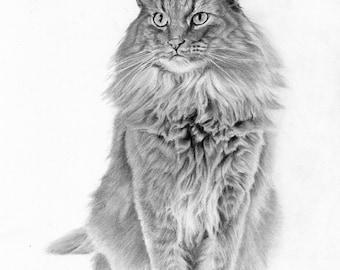 Custom pet portrait - Graphite pencil drawing