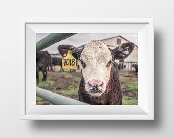 Cow Print, Farm Print, Cow Art, Cow Photography, Cow Art, Farm Wall Art, Photography, Beef Print, Instant Download Art