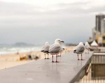 Seagulls on Australian Beach - Photography Print