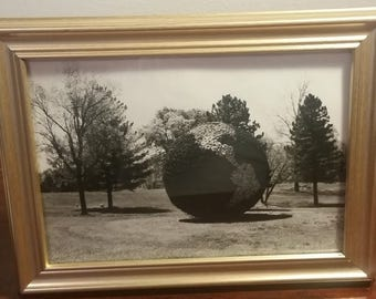 Vintage Black and White Photo of Flower Earth, Unique Images, Vintage Photo, Framed Photography, Framed Photo, Flower, World, Cemetery