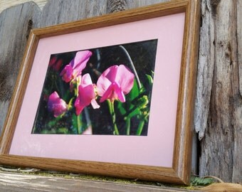 5x7 inch color photograph framed sweet peas in 9 x 11 inch frame MATTED