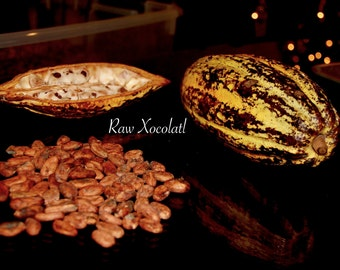 1 Lb Whole Raw Cacao Beans