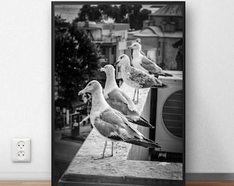 Bird Prints Bird Wall Art Black and White Photography Prints Bird Wall Decor Seagull Print Beach Wall Art Beach Photography Printable