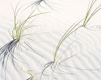 Dune Grasses 2 matted fine art archival print