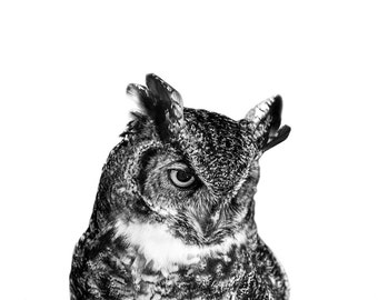 Owl Decor // Minimalist Art // Canvas Art // Baby Gift // Modern Art // Nursery Art // Black and White Photography // Mid Century Modern