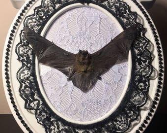 Spread Bat Ornate Frame