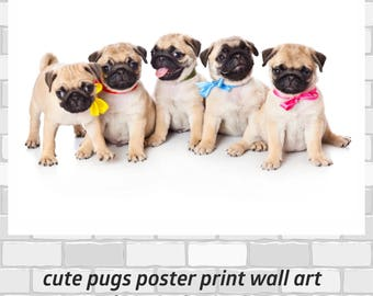 Cute Pugs poster print Wall Art in 4 sizes