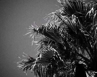 Art photography 'Palm Tree'