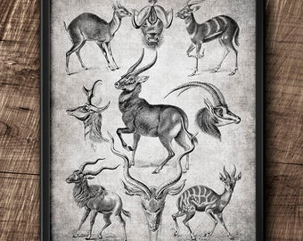 Antelope · 8x10 · Instant Download · Vintage · Animals ·  Collage · Wall · Digital File #61