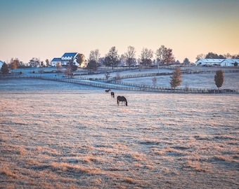 Frosty Sunrise in Horse Country