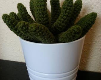 Succulent plant in the handmade crochet