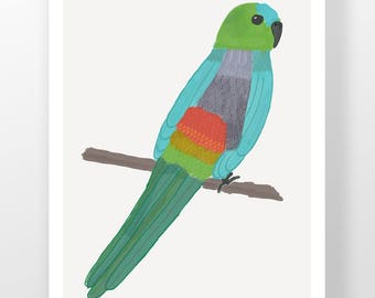 Red-rumped Parrot Illustration