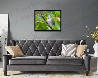 Hummingbird of Florence, Fine Art Prints, Nature Photography, Wall Art, Humming Bird, Nature, Oregon Wildlife