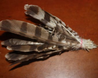feathers of Kestrel
