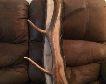 Elk antler coat rack