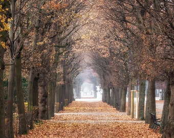 Vienna Photography, Ethereal Trees on Schonbrunn Palace Grounds, Canvas Gallery Wrap, 16x16 or 20x20 Large Wall Art