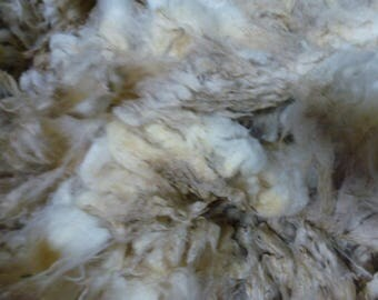 Rambouillet Fleece Raw 30 to 32 Micron One Pound  SALE