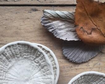 Limpet Dish
