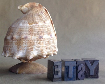 Vintage Seashell Figurine Sea Shell Art Summer Beach Cottage Decor