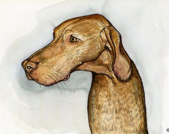 Hungarian Vizsla - Art Dog Print