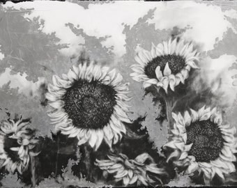 Sunflowers  - original drawing with silver leaf
