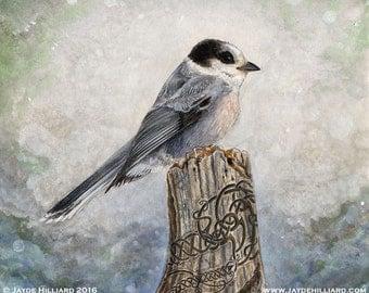 "8"" x 9"" Framed Original Mixed Media Painting - Whiskey Jack or Grey Jay Nature Illustration - Bird with Celtic Knotwork"