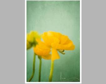 romantic still life, yellow ranunculus print, rustic home decor, ranunculus, yellow, ranunculus, bathroom decor, large wall art, nature art