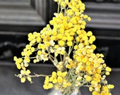 SALE: buy 1 get 1 free-Tansy flower bundles-small yellow flowers-wedding flowers-Tiny flowers