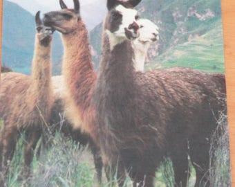 Jungle animal pictures G-3,jungle animal srcapbooking,scrapbook animal pictures,lamas,lions,gnous,monkeys,scrapbooking,jungle animals,
