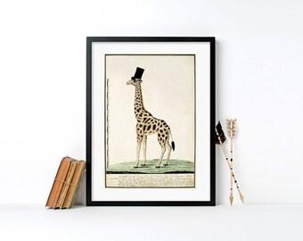The Dapper Giraffe framed print, vintage print, framed art, library art,