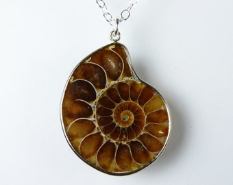 Caramel, Toffee, and Cream Ammonite Fossil Necklace, Genuine Ammonite Fossil Pendant, Sterling Silver Chain
