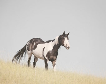 Paint Horse Photograph | Western Horse Art