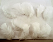 12 White Turkey Flats Plumage, loose feathers craft feathers  boutonnieres hat feathers