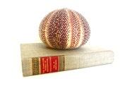 Vintage English Channel sea urchin shell, beach decor