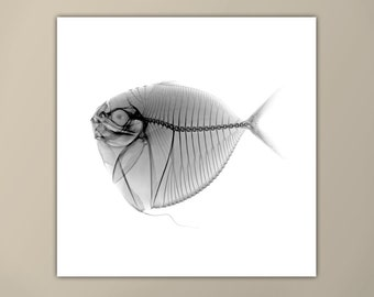 Black and White Fish X-Ray Print, Marine Life Art, Modern Art Print, Square Print, Moonfish, Minimalist Art Print, Custom Sizes Available