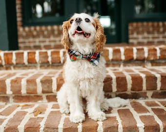 Preppy Montauk Madras Bow Tie Dog Collar