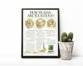 Iams Dog Food Advertising • Golden Retriever Dog • Iams Retro Promo • Vet Office Decor • Animal Lover Gift • 1991 Ad For Iams Dog Products