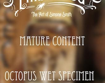Octopus Wet Specimen