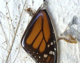 Mariposa Monarca.  Dije de Mariposa Monarca Verdadera en Plata.