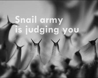 Cactus Needles, Snail Army, Funny Black and White Photo, Still Life Photography, Small 4x6 Photo Print